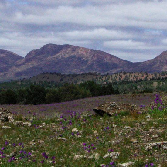 Flinders Ranges in Spring